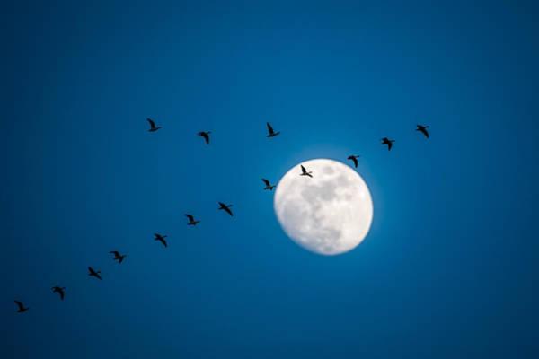Photograph - Moonlight Flight by Jeff Phillippi