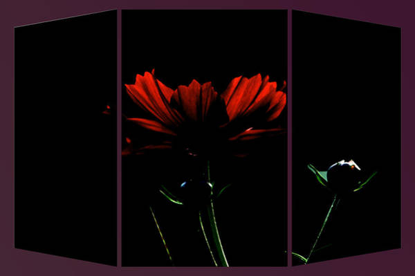 Doona Mixed Media - Moon Light Flora Triptych 3 Panel by Thomas Woolworth