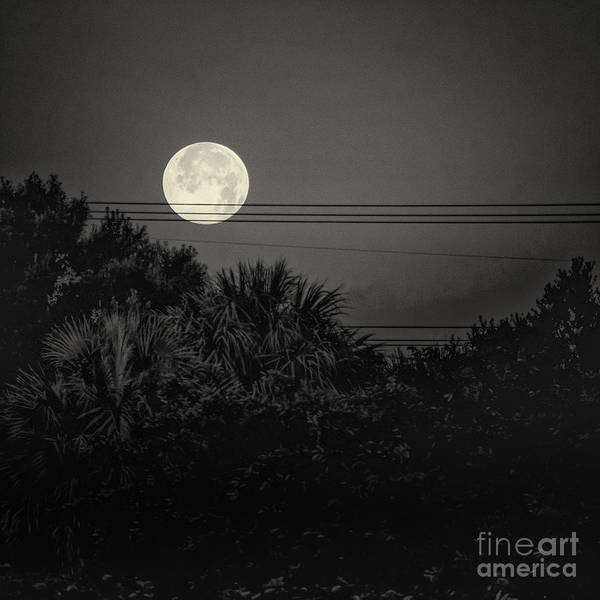 Photograph - Moon On A Wire by Robin Zygelman