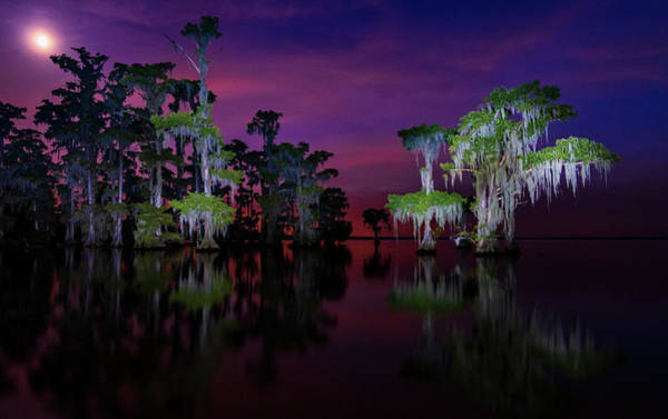 Photograph - Moon Over Maurepas Swamp by Andy Crawford