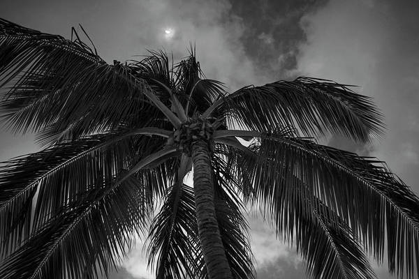 Photograph - Moon Over Palm Tree Saint Lucia Caribbean Black And White by Toby McGuire