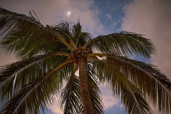 Photograph - Moon Over Palm Tree Saint Lucia Caribbean by Toby McGuire