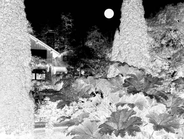 Vancouver Digital Art - Moon Over Stanley Park by Will Borden