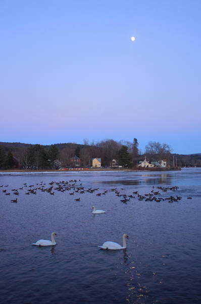 Wall Art - Photograph - Moon Over The Connecticut River And Swans by John Burk
