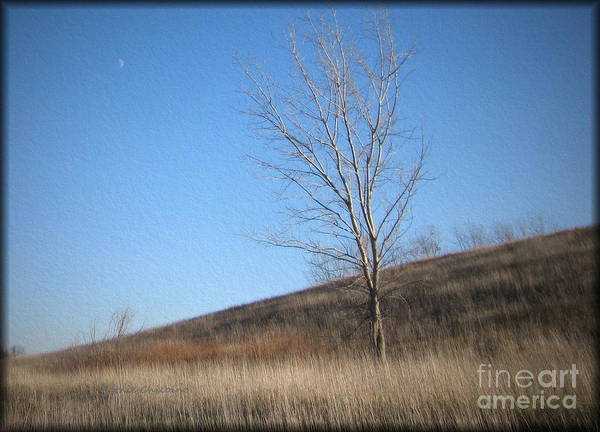 Photograph - Moon Rise by Kathie Chicoine