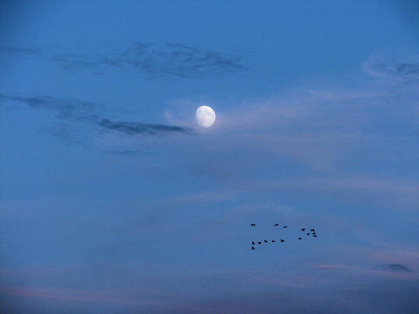 Photograph - Moon Rises Geese Fly by Lora Fisher