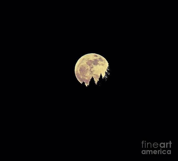 Photograph - Moon Rising by Ann E Robson