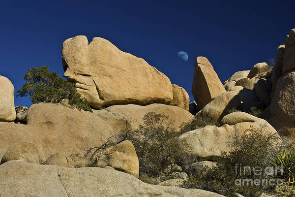 Photograph - Moon Rising Over Indian Rock by Photography by Laura Lee