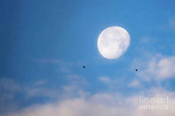 Photograph - Moon Set by Cheryl McClure