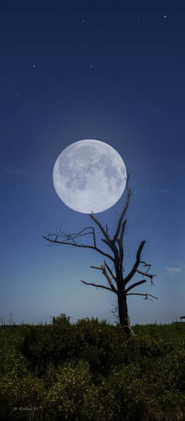 Sfx Photograph - Moon Stuck In A Tree by Brian Wallace