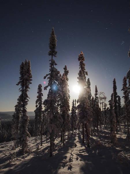 Photograph - Moon Through The Spruces by Ian Johnson