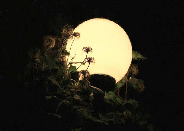 Moonglow Thistles Art Print