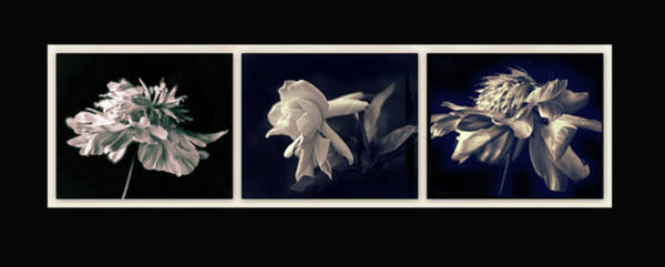 Photograph - Moonglow Triptych by Jessica Jenney