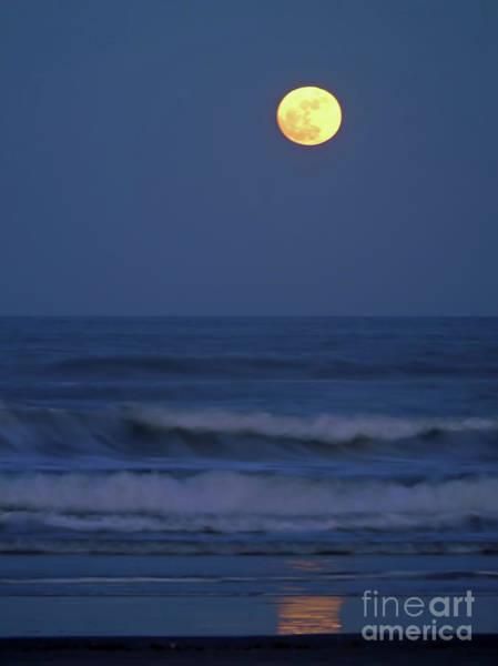 Photograph - Moonlight At The Beach by D Hackett