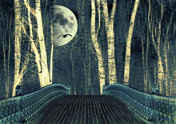 Photograph - Moonlight Birch by Jessica Jenney