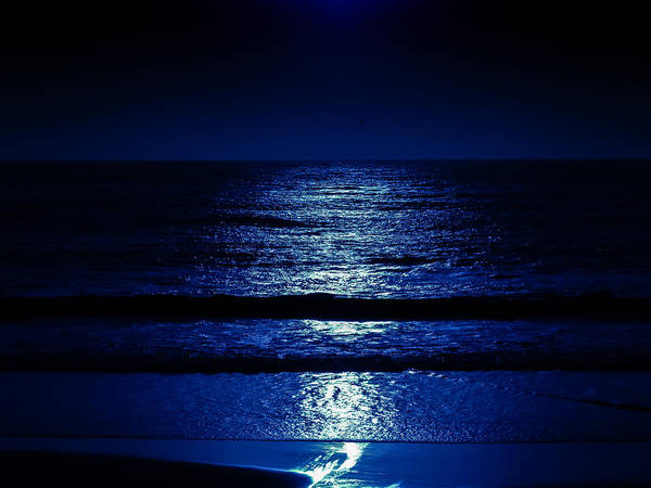 Photograph - Moonlight Blues by Robin Zygelman