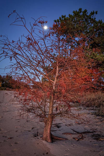 Photograph - Moonlight by Lisa McStamp