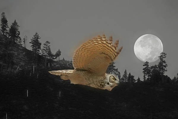 Wall Art - Photograph - Moonlight Owl by Donna Kennedy