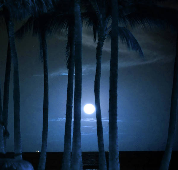 Wall Art - Photograph - Moonlight Palms Shower Curtain by Kevin Smith