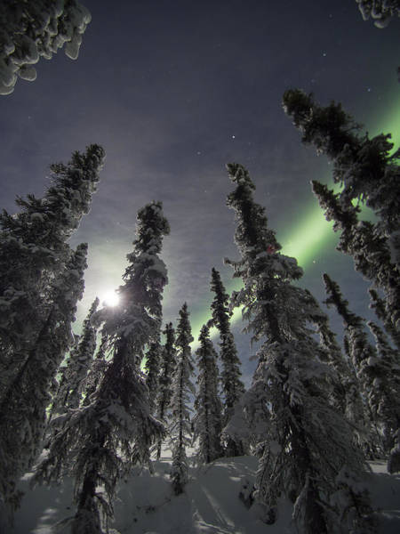 Photograph - Moonlit Aurora by Ian Johnson