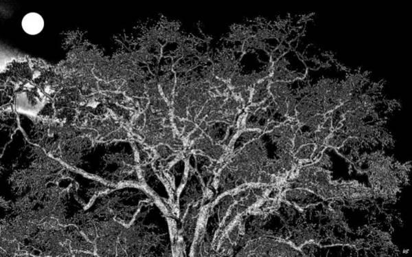 California Oak Digital Art - Moonlit Night by Will Borden