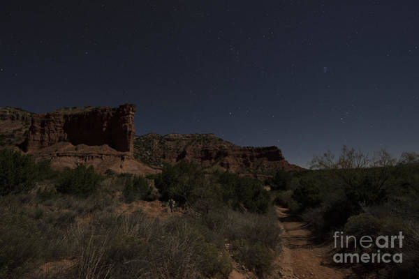 Photograph - Moonlit Path by Melany Sarafis