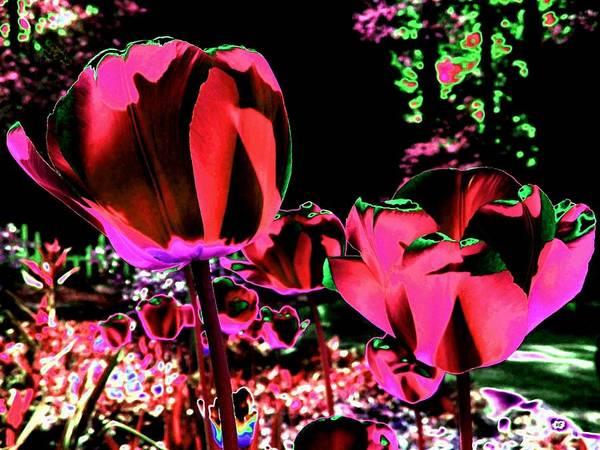 Wall Art - Digital Art - Moonlit Radiant Tulips by Will Borden