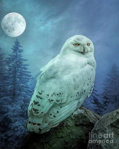 Photograph - Moonlit Snowy Owl by Brian Tarr