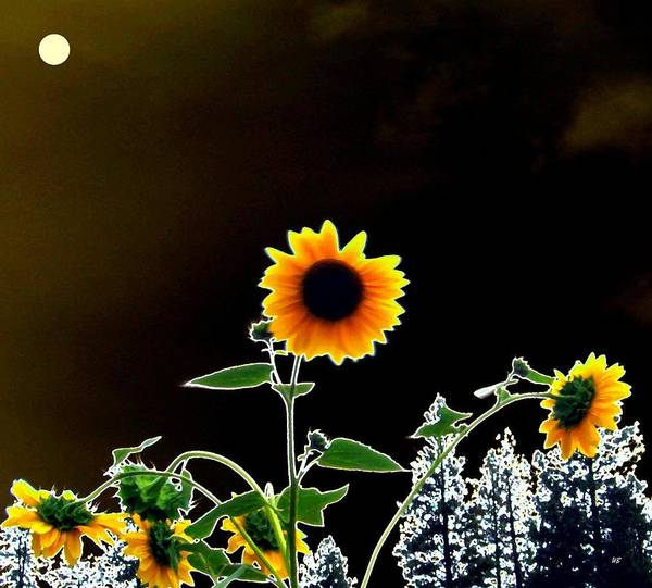 Wall Art - Digital Art - Moonlit Sunflowers by Will Borden