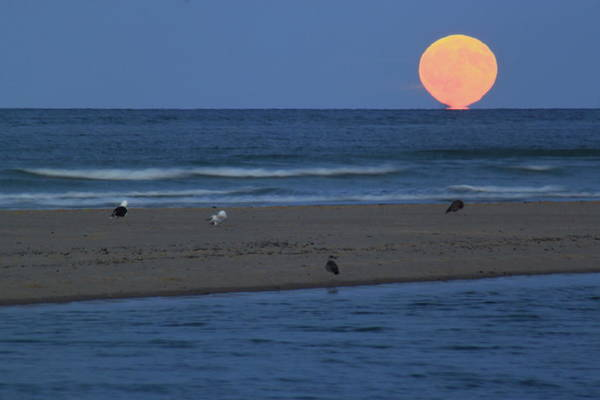 Wall Art - Photograph - Moonrise At Cape Cod National Seashore by John Burk
