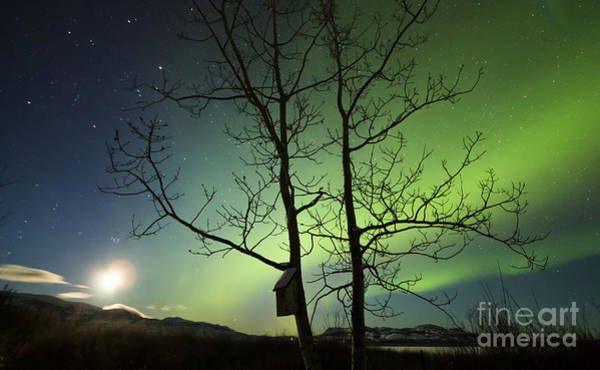 Photograph - Moonset And The Northern Lights, Yukon by Philip Hart