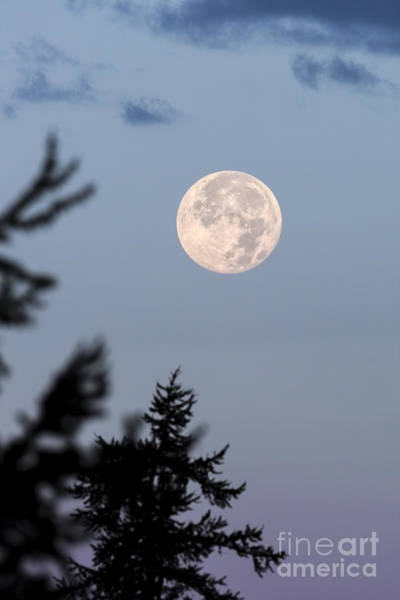 Photograph - Moonset At Dawn by Jemmy Archer
