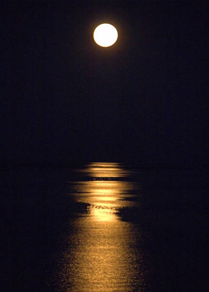 Photograph - Moonstruck by Newwwman