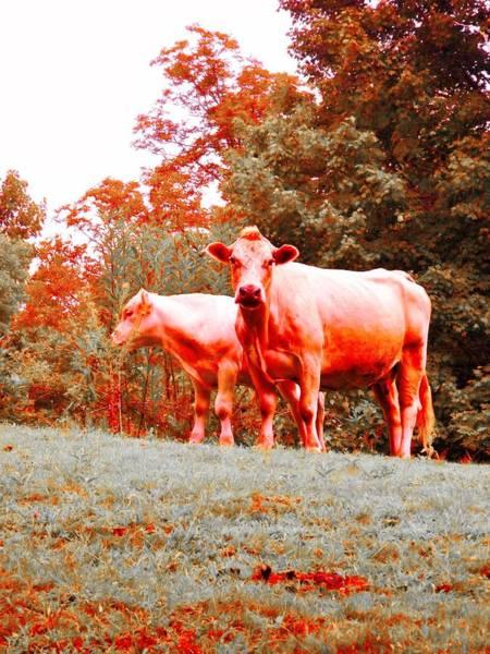 Milk Farm Restaurant Photograph - Moooo by Zen WildKitty