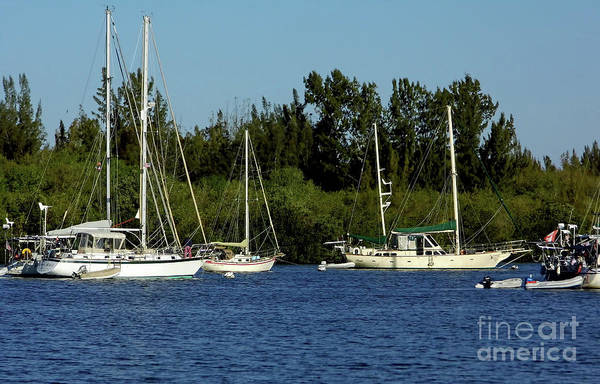 Photograph - Moored In The Indian River Lagoon by D Hackett