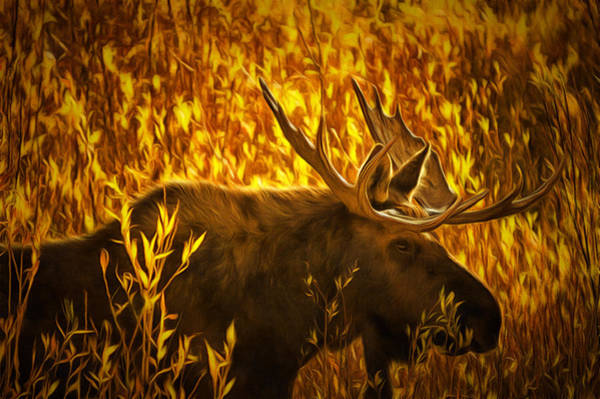 Antlers Digital Art - Moose In Willows by Mark Kiver