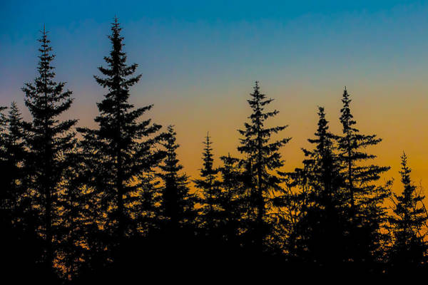 Photograph - Moose Pass Evening by Sara Hudock