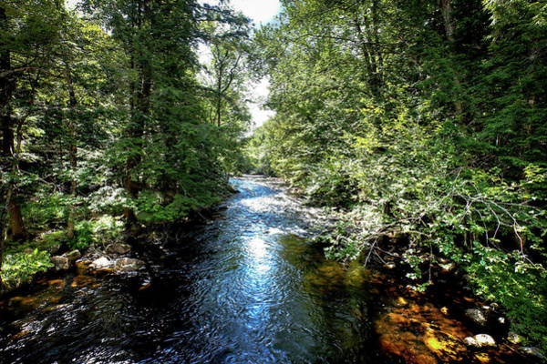 Photograph - Moose River At Covewood by David Patterson