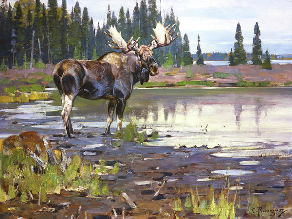 North American Wildlife Wall Art - Painting - Moose by Rungius Carl