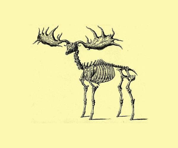 Digital Art - Moose Skeleton T Shirt Design by Bellesouth Studio