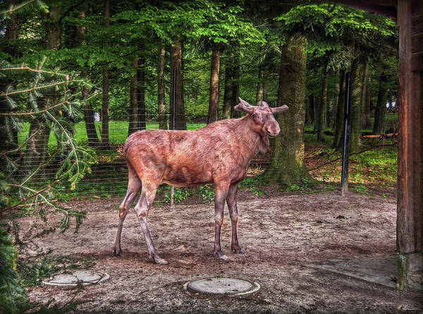 Zuerich Wall Art - Photograph - Moose Zone by Hanny Heim