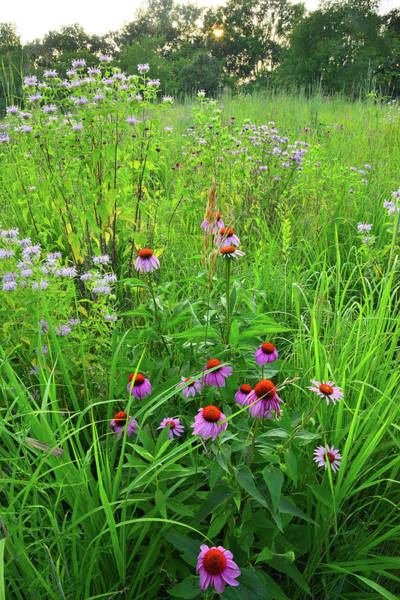 Photograph - Moraine Hills Shelley Kelly Prairie Wildflowers by Ray Mathis