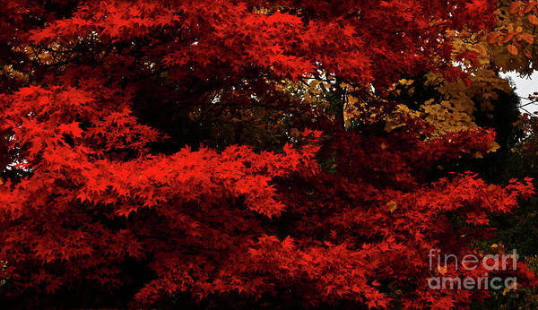 Patzer Photograph - More About Maple by Greg Patzer