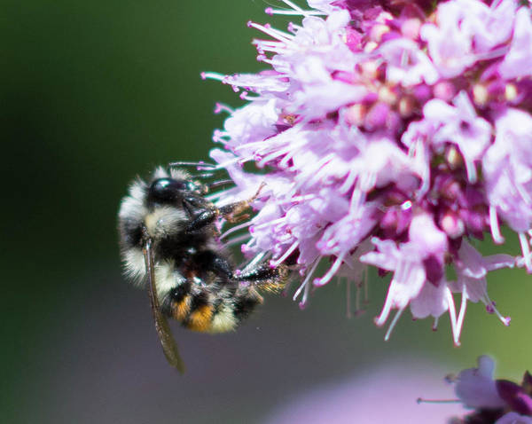 Photograph - One Bee by Marilyn Wilson