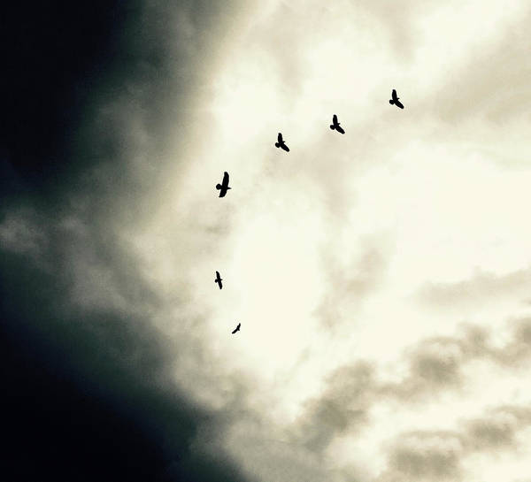 Photograph - Big Sky Crows by Michael Van Huffel