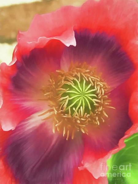 Photograph - More Poppy Perfection by Teresa Wilson