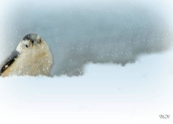 Photograph - More Snow by Barbara S Nickerson