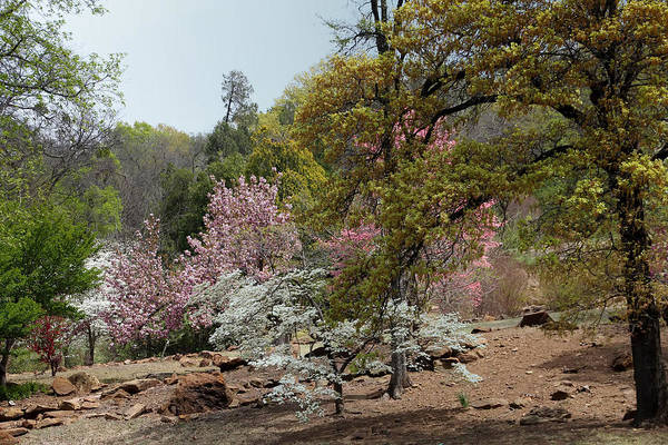 Honor Heights Park Photograph - More Spring Trees by Carolyn Fletcher
