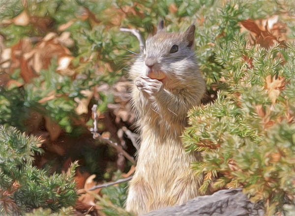 Grey Squirrel Photograph - More Than I Can Chew by Donna Kennedy