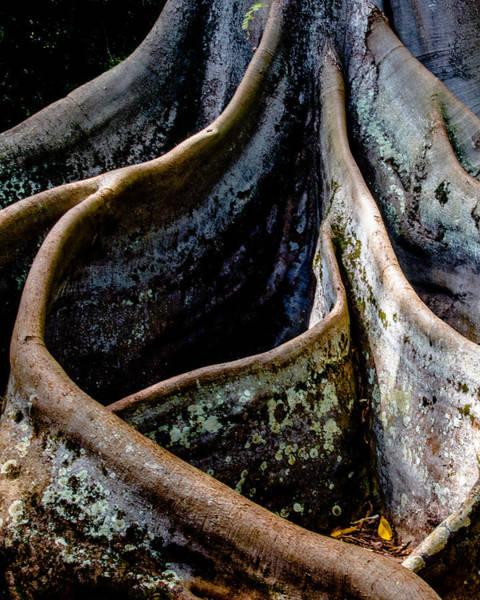 Allerton Garden Photograph - Moreton Bay Fig by Alan Hart